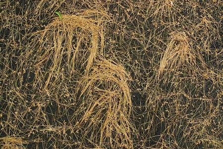 Ground with White Pine Detritus.jpg