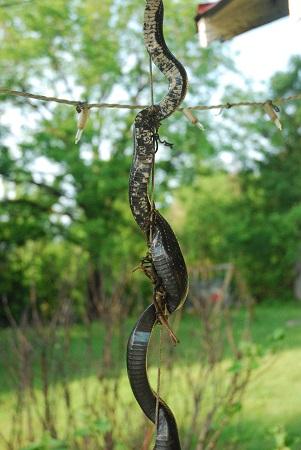 Snake on String