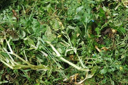 Ground in late summer garden.jpg