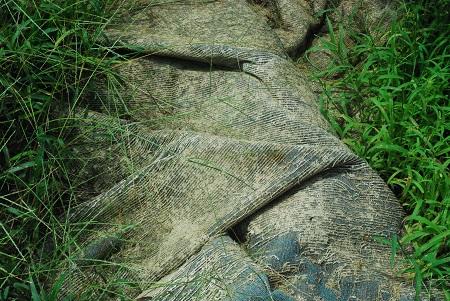 Ground with wet carpet.jpg