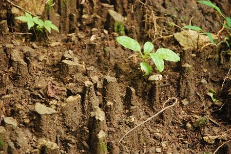 Ground with pebbles on columns.jpg