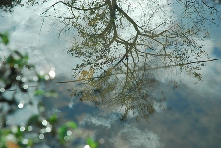 Ground with reflected tree.jpg