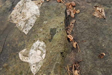 Ground with ghost leaves.jpg