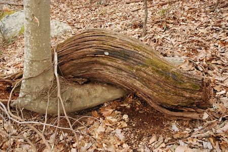 Ground with wooden embrace.jpg