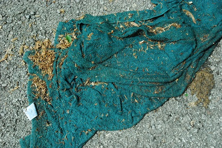 Ground with beaten towel_1176.jpg