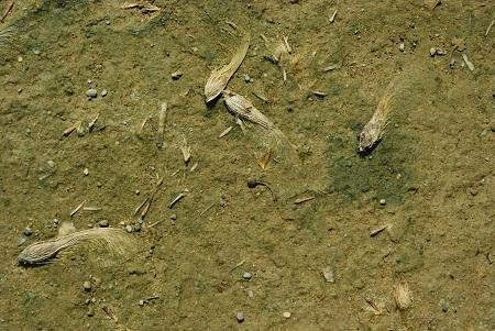 Ground with maple seeds_1192.jpg