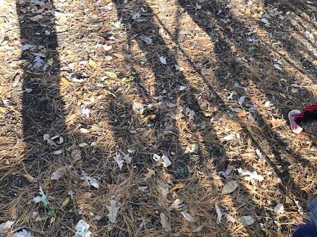 Ground with playground shadows_0559