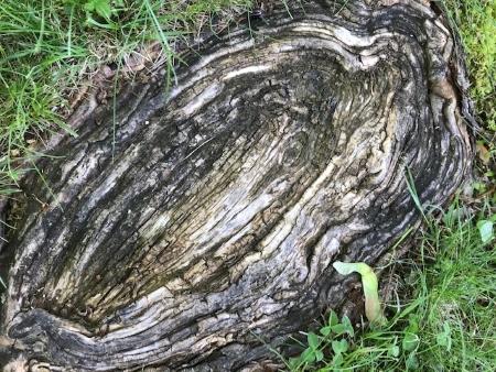 Ground with root ovum_3146